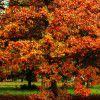 【シンプル思考】あそこなら、紅葉をきっともっと楽しめる。