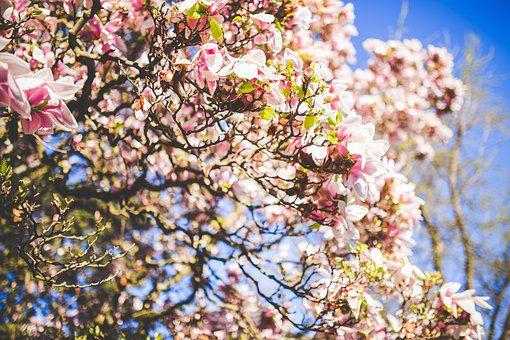 bloom-1835810__340-1