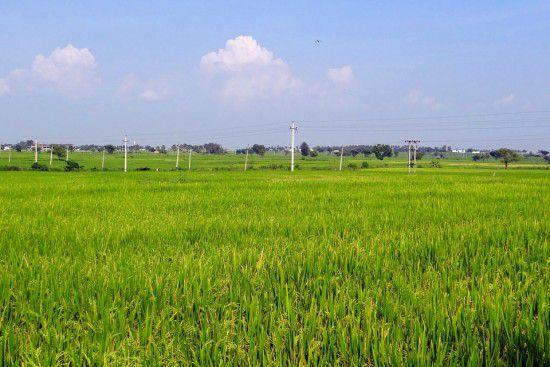 rice-fields-204145_960_720