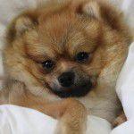 【ドッグシッター】犬がかわいすぎて帰れないのだがどうしたらいいか