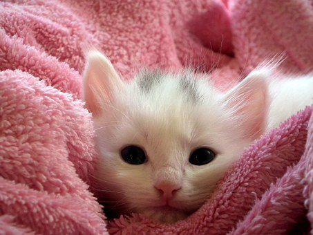 kitten-227009__340