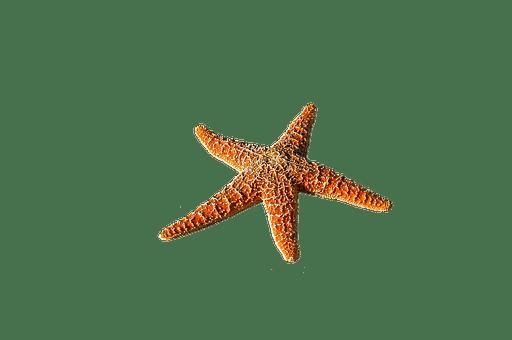 starfish-2634646__340