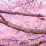 【防ごう】『春バテ』に注意!3月は1年もで最も体調を崩しやすい